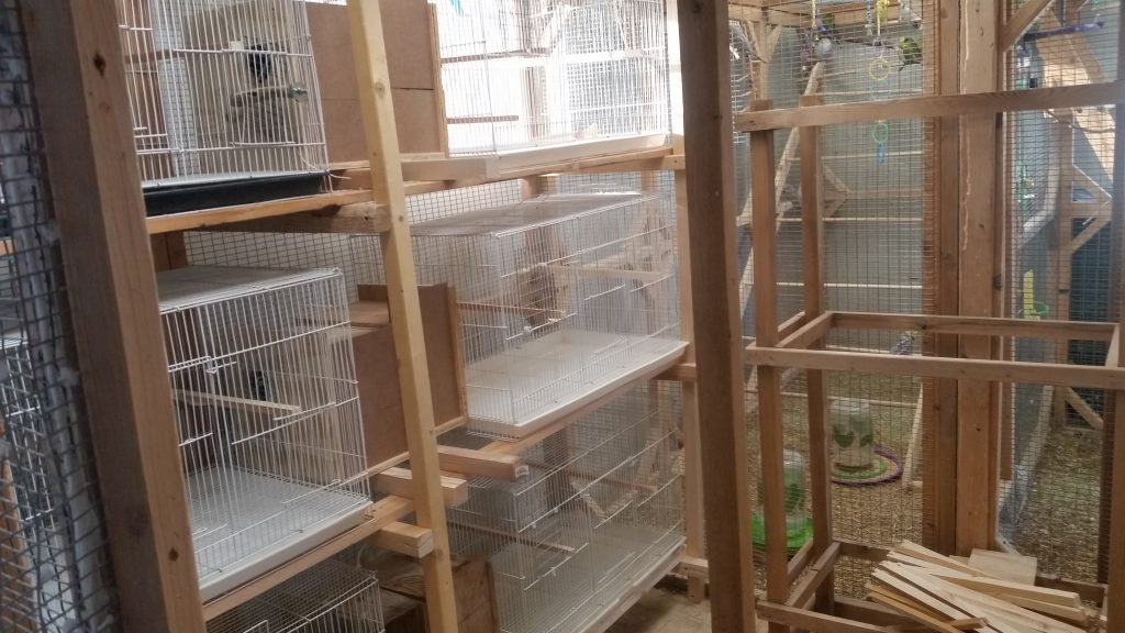 New Breeding room for Budgies