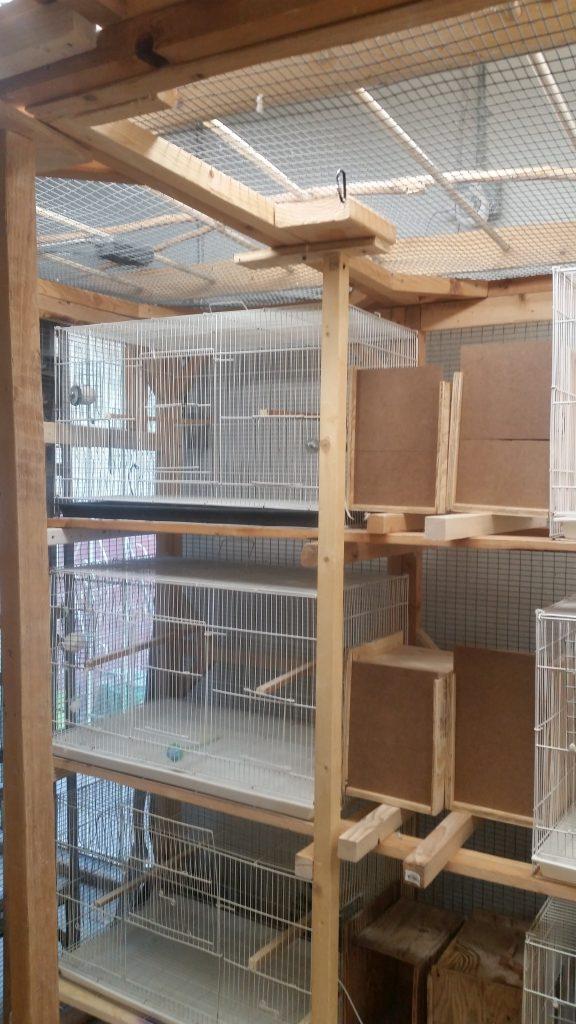 New Budgie Breeding Setup