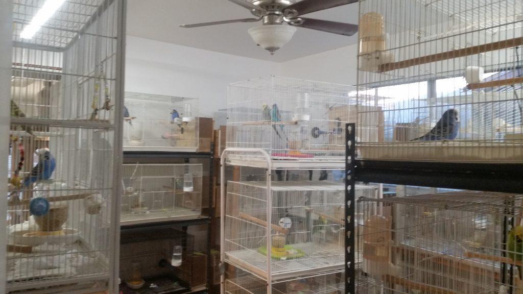 Budgie Breeding Room 2